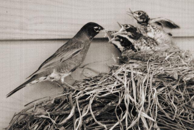 full nest